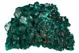 "1.8"" Gorgeous, Gemmy Dioptase Crystal Cluster - Congo - #129543-1"