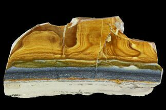 "Buy 4.8"" Polished Golden Picture Jasper Section - Nevada - #129718"
