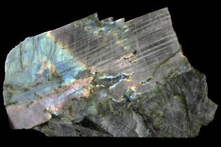 "Buy 11.3"" Flashy, Polished Labradorite Slab - Madagascar - #129886"