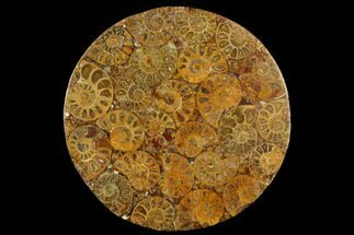 "8"" Composite Plate Of Agatized Ammonite Fossils For Sale, #130586"