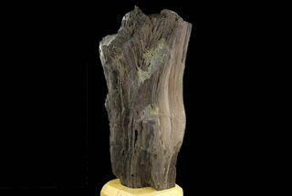 "Buy 13.5"" Petrified Wood Log Covered In Druzy Quartz - Zwenkau, Germany - #130540"