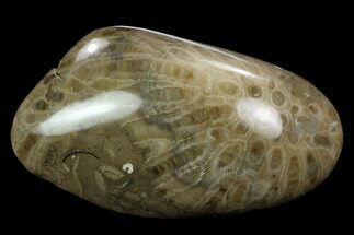 "4.8"" Polished ""Petoskey Stone"" (Fossil Coral) - Michigan For Sale, #131087"