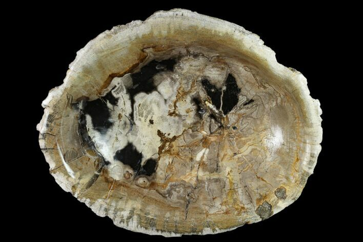"9.8"" Tropical Hardwood Petrified Wood Bowl - Indonesia"