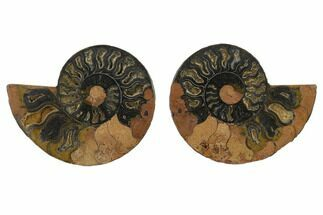 "Buy 3.95"" Cut/Polished Ammonite Fossil (Pair) - Unusual Black Color - #132562"