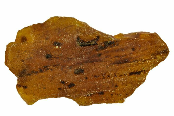 "2.3"" Rough Baltic Amber - Kaliningrad, Russia"