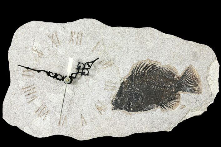 "13.5"" Wide Clock With Cockerellites Fish Fossil - Wyoming"