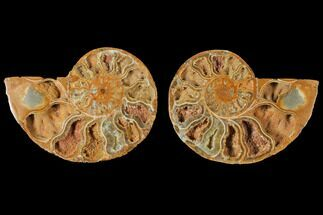 "4.8"" Cut & Polished Agatized Ammonite Fossil (Pair)- Jurassic For Sale, #131735"