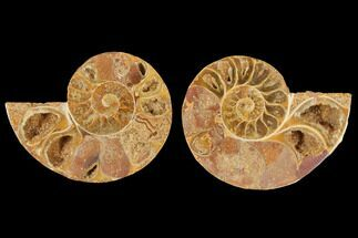"Buy 3.1"" Cut & Polished Agatized Ammonite Fossil (Pair)- Jurassic - #131695"