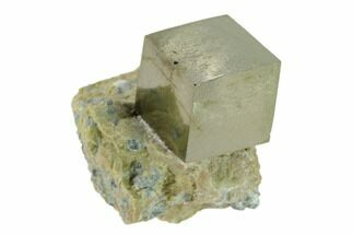 "Buy .5"" Pyrite Cube In Matrix - Navajun, Spain - #132850"