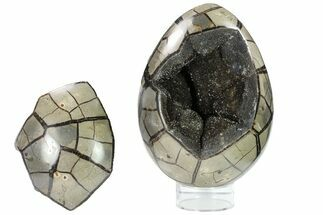 "Buy 7.7"" Septarian ""Dragon Egg"" Geode - Removable Section - #134632"