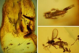 Fossil Fly Swarm (Diptera) and an Unidentified Larva in Baltic Amber For Sale, #135080