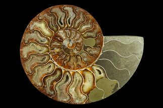 "6.5"" Agatized Ammonite Fossil (Half) - Madagascar For Sale, #135284"