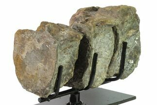 Three Articulated Hadrosaur (Brachylophosaur) Vertebrae - Montana  For Sale, #135464