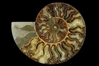 "6.8"" Agatized Ammonite Fossil (Half) - Madagascar For Sale, #135290"