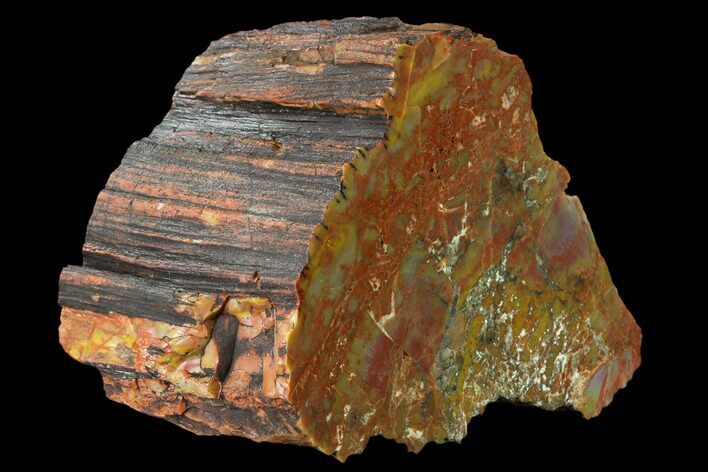 "6.6"" Colorful, Polished Petrified Wood Section - Arizona"