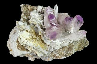 "2.1"" Amethyst Crystal Cluster - Las Vigas, Mexico For Sale, #137003"