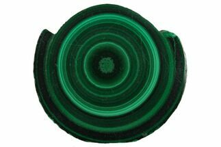 "1.4"" Polished Malachite Stalactite Slice - Congo For Sale, #137048"