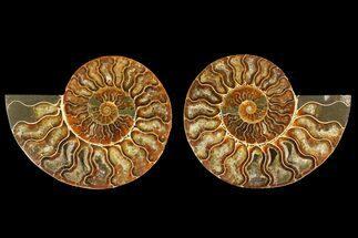 "Buy 5.3"" Agatized Ammonite Fossil (Pair) - Madagascar - #135259"