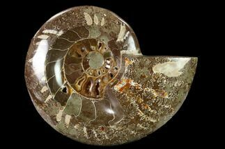 "5.3"" Wide Polished Fossil Ammonite ""Dish"" - Madagascar For Sale, #137402"