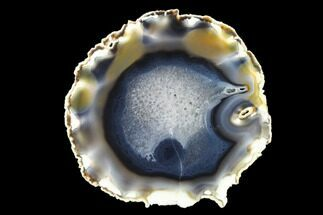 "Buy 5.9"" Polished Brazilian Agate Slice - #137659"