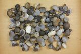 "Wholesale Lot: 1 to 1.7"" Natural Chalcedony Nodules - 65 Pieces - #137988-1"