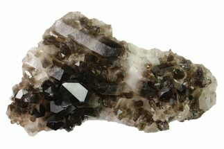 "Buy 6.8"" Dark Smoky Quartz Crystal Cluster - Brazil - #137839"