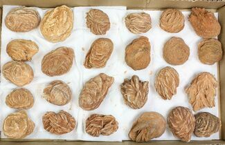 "Lot: 2-3"" Desert Rose From Morocco - 25 Pieces For Sale, #138119"