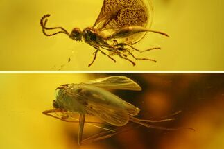 Buy Large Fossil Flies (Diptera) and a Wasp (Hymenoptera) in Baltic Amber - #139018