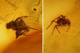 Order Araneae (Spider) & Order Diptera (Fly) - Fossils For Sale - #139068