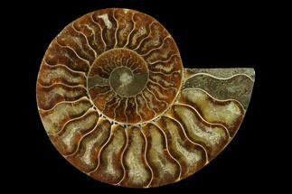 "4.1"" Agatized Ammonite Fossil (Half) - Madagascar For Sale, #139679"