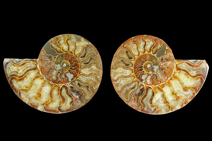 "4.9"" Agatized Ammonite Fossil (Pair) - Madagascar"