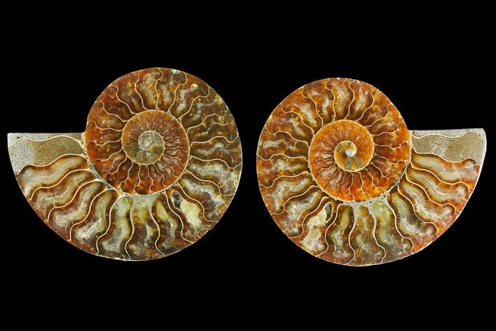 "4.35"" Agatized Ammonite Fossil (Pair) - Madagascar"