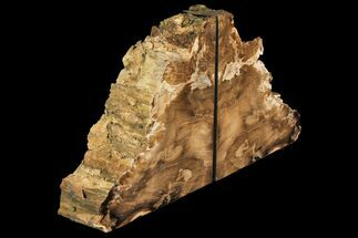 "6.5"" Petrified Wood Bookends - McDermitt, Oregon For Sale, #141089"