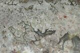 "4.9"" Polished Crazy Lace Agate Slab - Mexico - #141201-1"