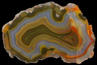 "Buy 4"" Polished Condor Agate Slab - Argentina  - #141370"