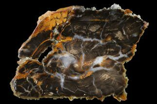 Sycamore - Fossils For Sale - #141411