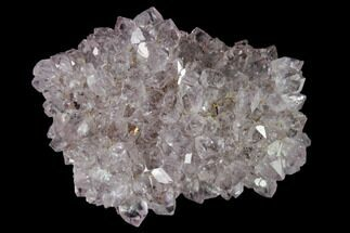 "1.6"" Amethyst Rosette - Artigas, Uruguay For Sale, #142064"