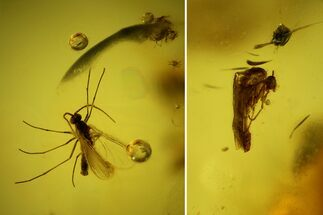 Buy Three Detailed Fossil Flies (Diptera) In Baltic Amber - #142222