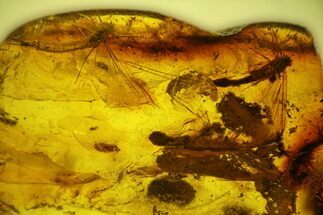Three Partial Fossil Mayflies (Ephemeroptera) In Baltic Amber For Sale, #142238