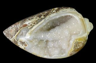 "1.26"" Chalcedony Replaced Gastropod With Druzy Quartz - India For Sale, #142270"