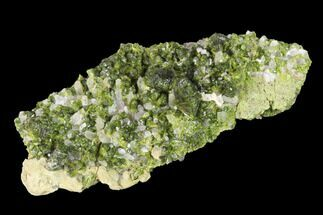 "3.15"" Lustrous Epidote On Quartz Crystals - Morocco For Sale, #142733"