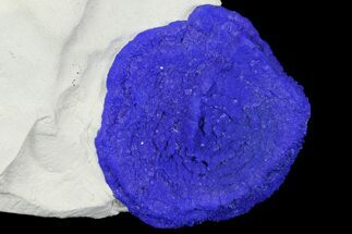 "2.2"" Blue Azurite Sun on Siltstone - Australia For Sale, #142790"