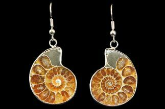 Fossil Ammonite Earrings - 110 Million Years Old For Sale, #142871