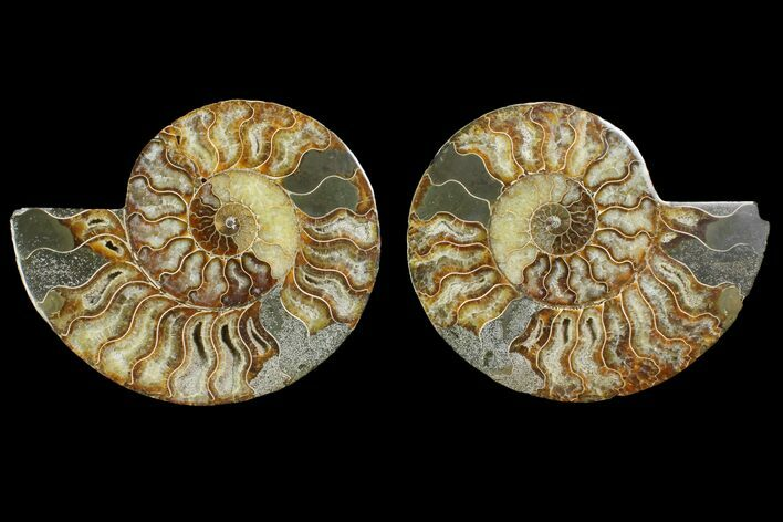 "6.45"" Agatized Ammonite Fossil (Pair) - Agatized"