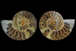 "Buy 7.05"" Agatized Ammonite Fossil (Pair) - Crystal Pockets - #144112"