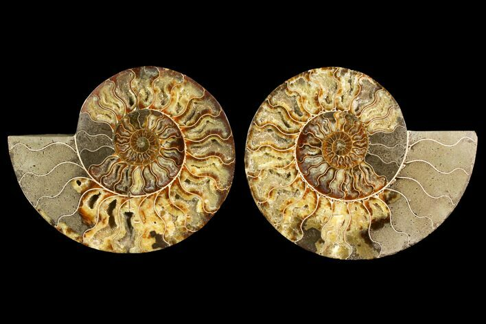 "9"" Agatized Ammonite Fossil (Pair) - Crystal Filled Chambers"
