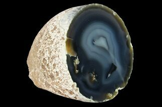 "3.8"" Cut & Polished Brazilian Agate  For Sale, #146273"