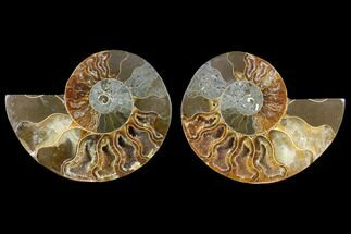 "3.2"" Agatized Ammonite Fossil (Pair) - Crystal Filled Chambers For Sale, #145844"