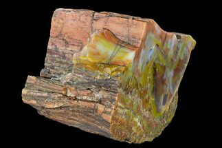 "Buy 6.5"" Wide, Polished Petrified Wood (Araucarioxylon) Section - Arizona - #147835"