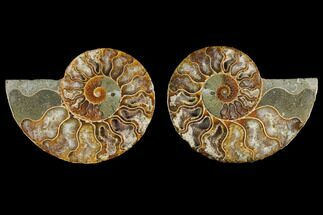 "2.7"" Agate Replaced Ammonite Fossil (Pair) - Madagascar For Sale, #145814"
